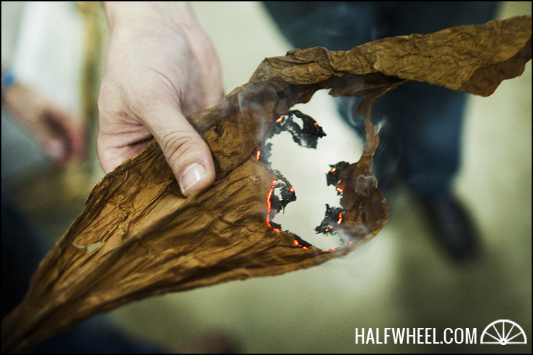 Burning a tobacco leaf to see how fast and even the burn line progresses.