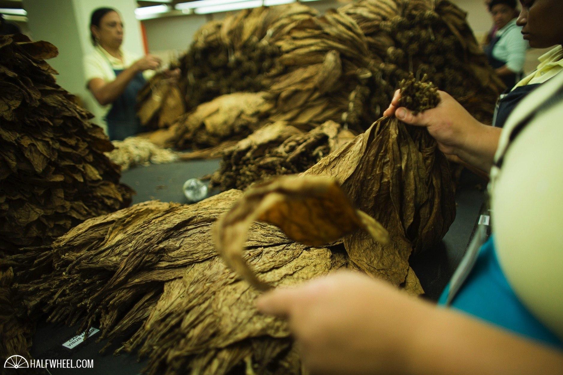Procesadora de Tabaco Palmarejo  Davidoff 5