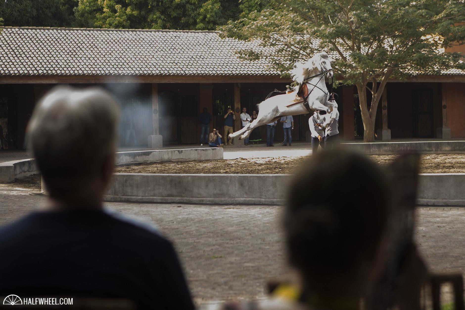 Puro Sabor 2016 Equestrian Show